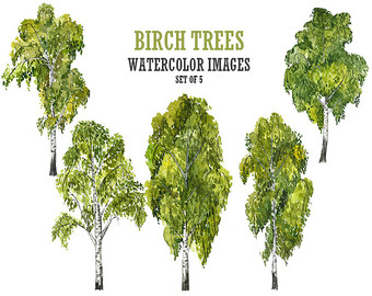 Birch clipart #10, Download drawings