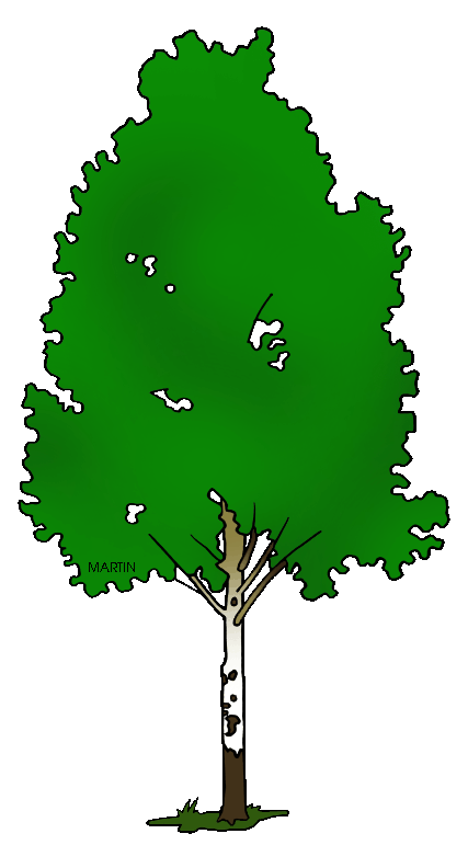 Birch clipart #18, Download drawings