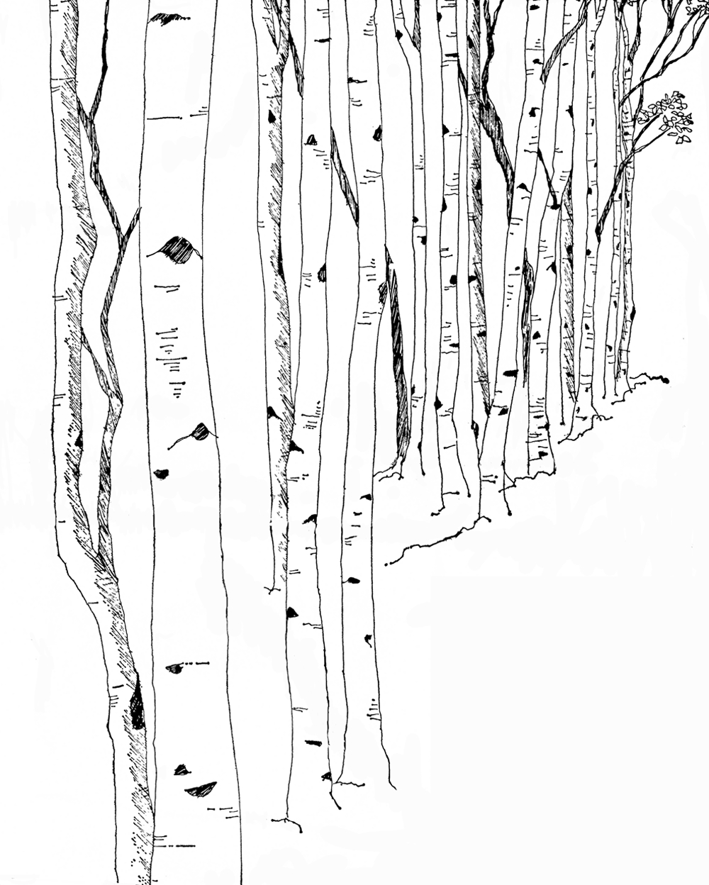 Birch clipart #16, Download drawings