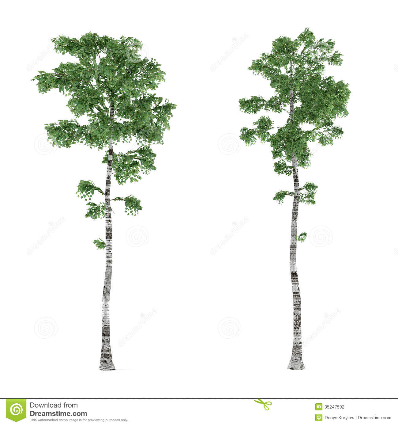Birch clipart #1, Download drawings