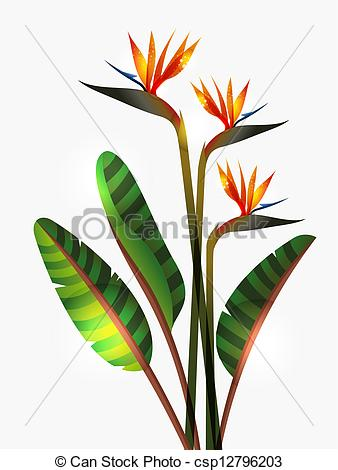 Bird Of Paradise clipart #8, Download drawings