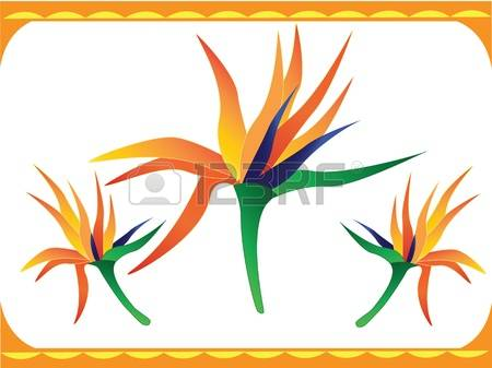 Bird Of Paradise clipart #10, Download drawings