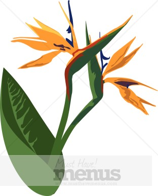 Bird Of Paradise clipart #4, Download drawings