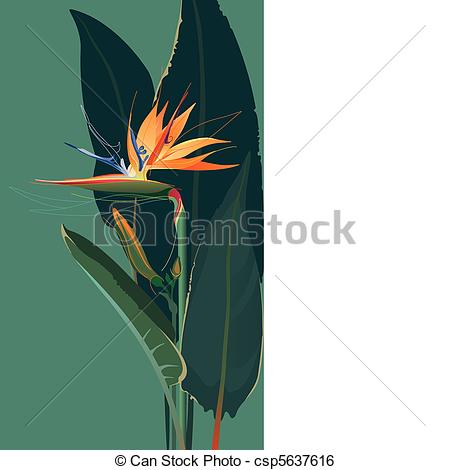 Bird Of Paradise clipart #3, Download drawings