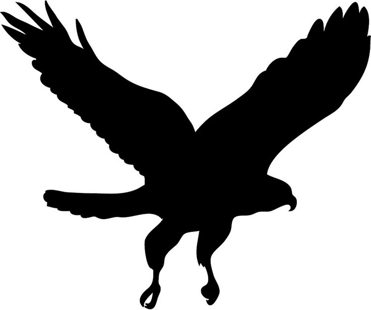 Bird Of Prey clipart #10, Download drawings