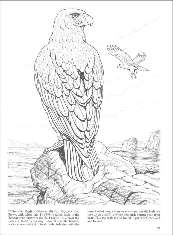 Bird Of Prey coloring Download