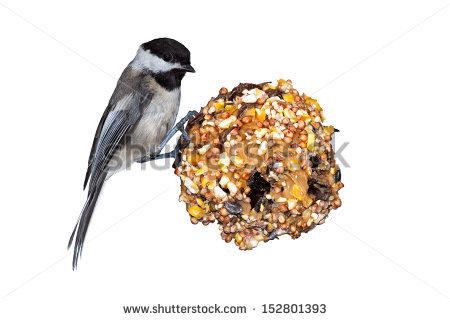 Birdfeeding clipart #11, Download drawings