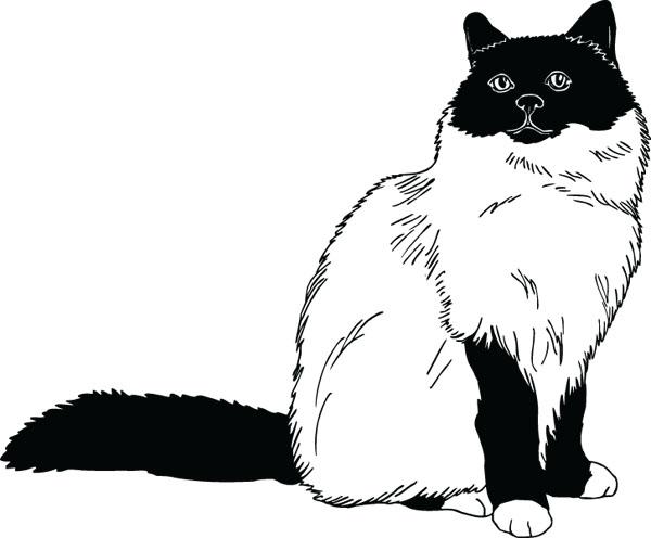Birman Cat clipart #2, Download drawings