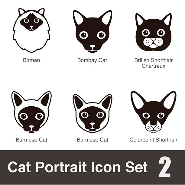 Chartreux clipart #18, Download drawings