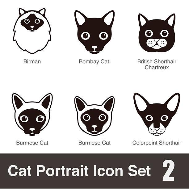 Birman Cat clipart #10, Download drawings