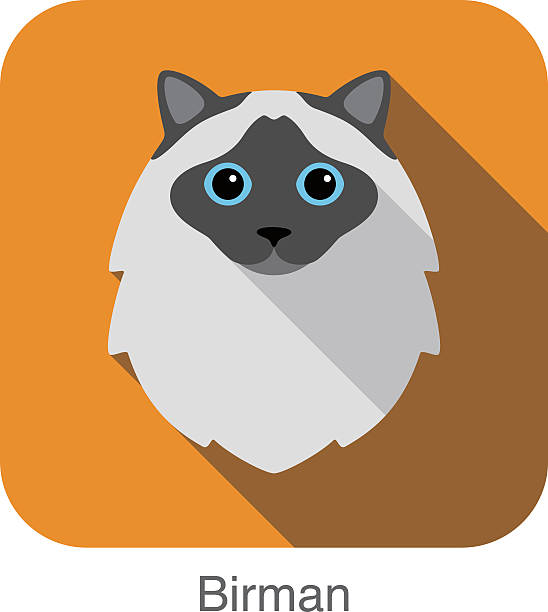 Birman Cat clipart #8, Download drawings