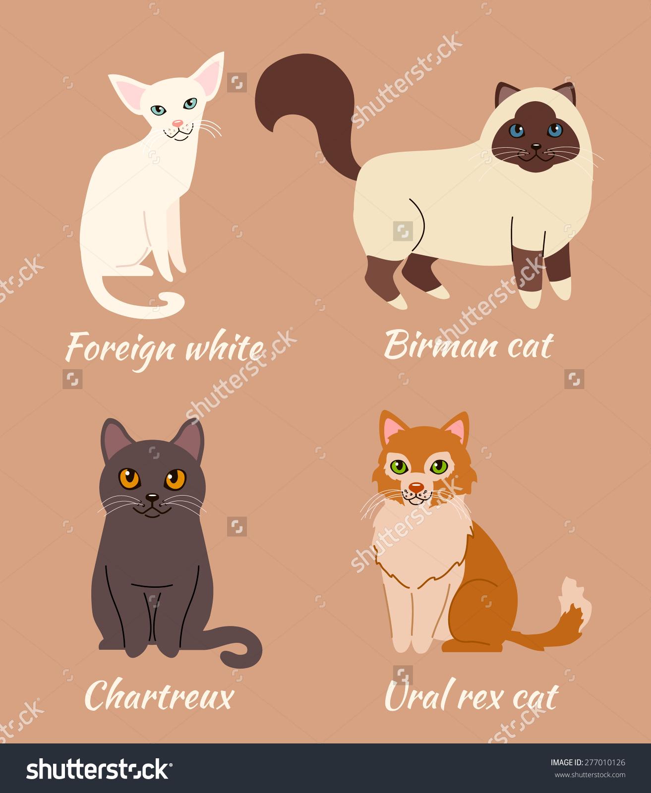 Birman Cat clipart #19, Download drawings