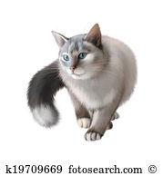 Birman Cat clipart #13, Download drawings