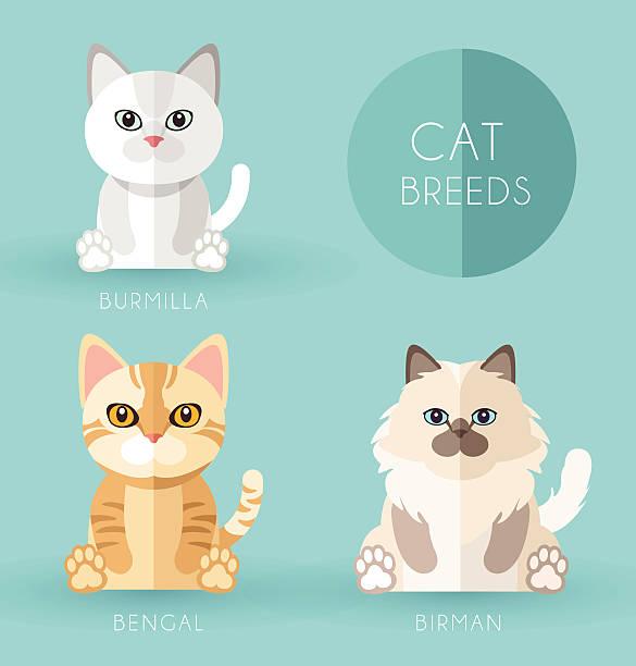 Birman Cat clipart #17, Download drawings