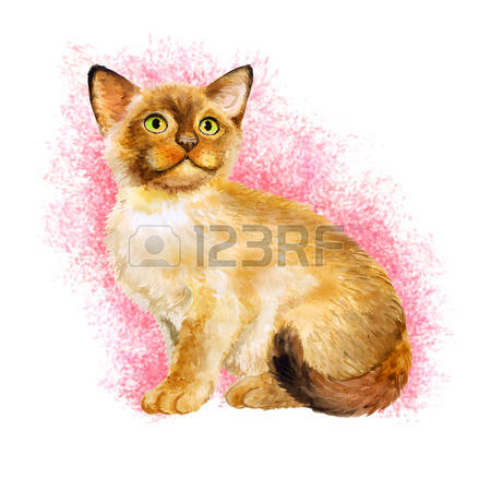 Birman Cat clipart #18, Download drawings