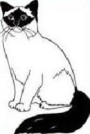 Birman Cat clipart #5, Download drawings