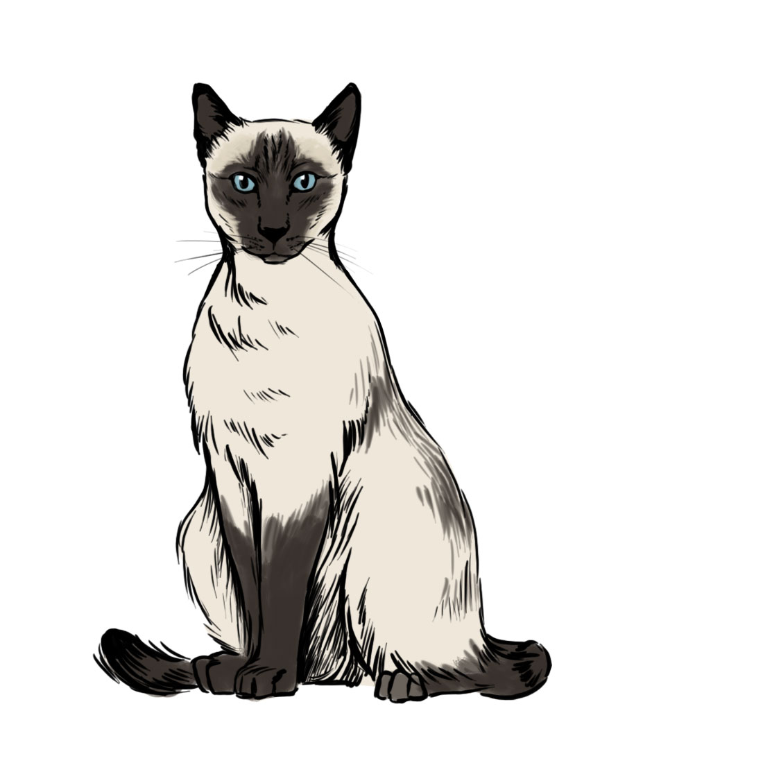 Siamese Cat svg #3, Download drawings