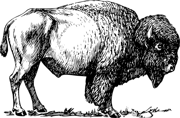Bison clipart #6, Download drawings
