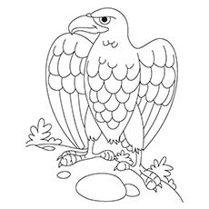 Steller's Sea Eagle coloring #15, Download drawings