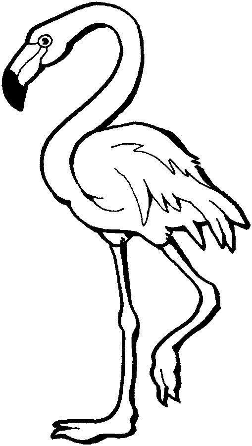 Chilean Flamingo coloring #1, Download drawings