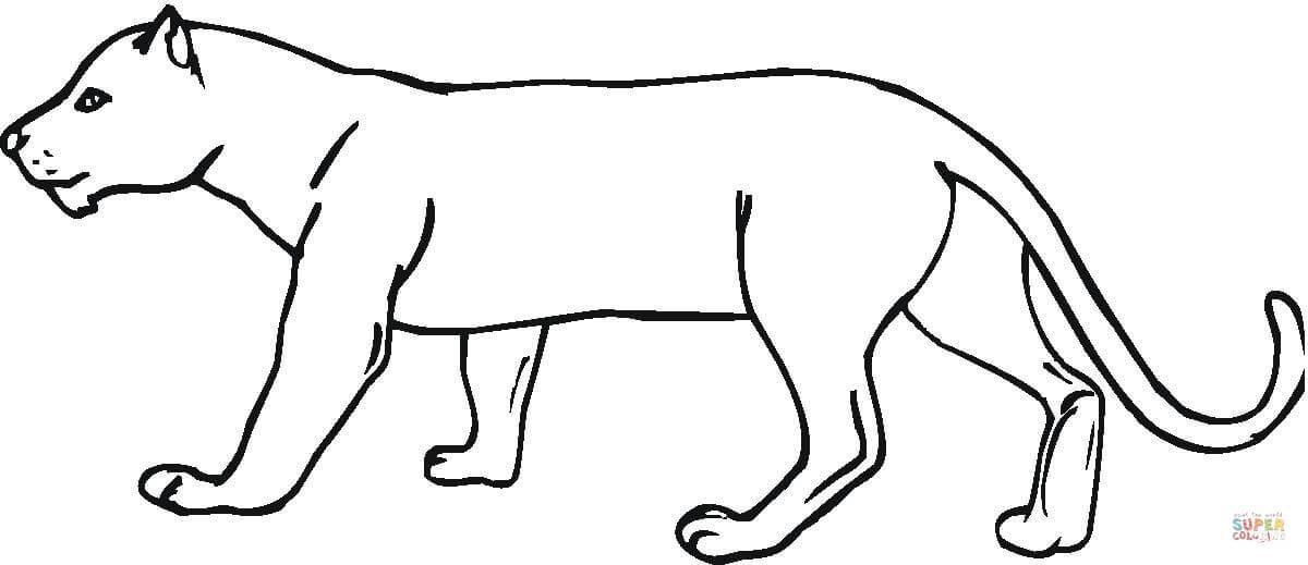 Puma coloring #5, Download drawings