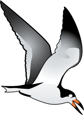Black Skimmer clipart #2, Download drawings