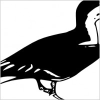 Black Skimmer clipart #3, Download drawings