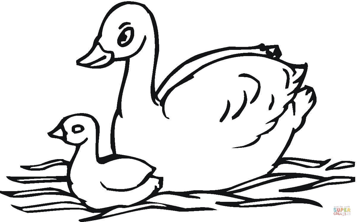 Swan coloring Download Swan coloring
