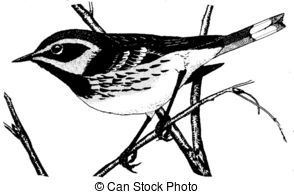 Black Trimian Warbler clipart #9, Download drawings