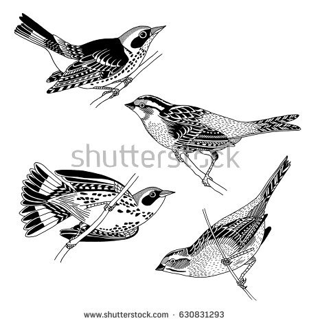 Black Trimian Warbler clipart #11, Download drawings
