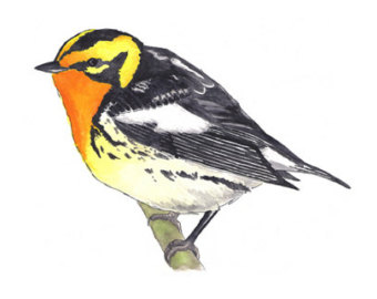Black Trimian Warbler clipart #3, Download drawings