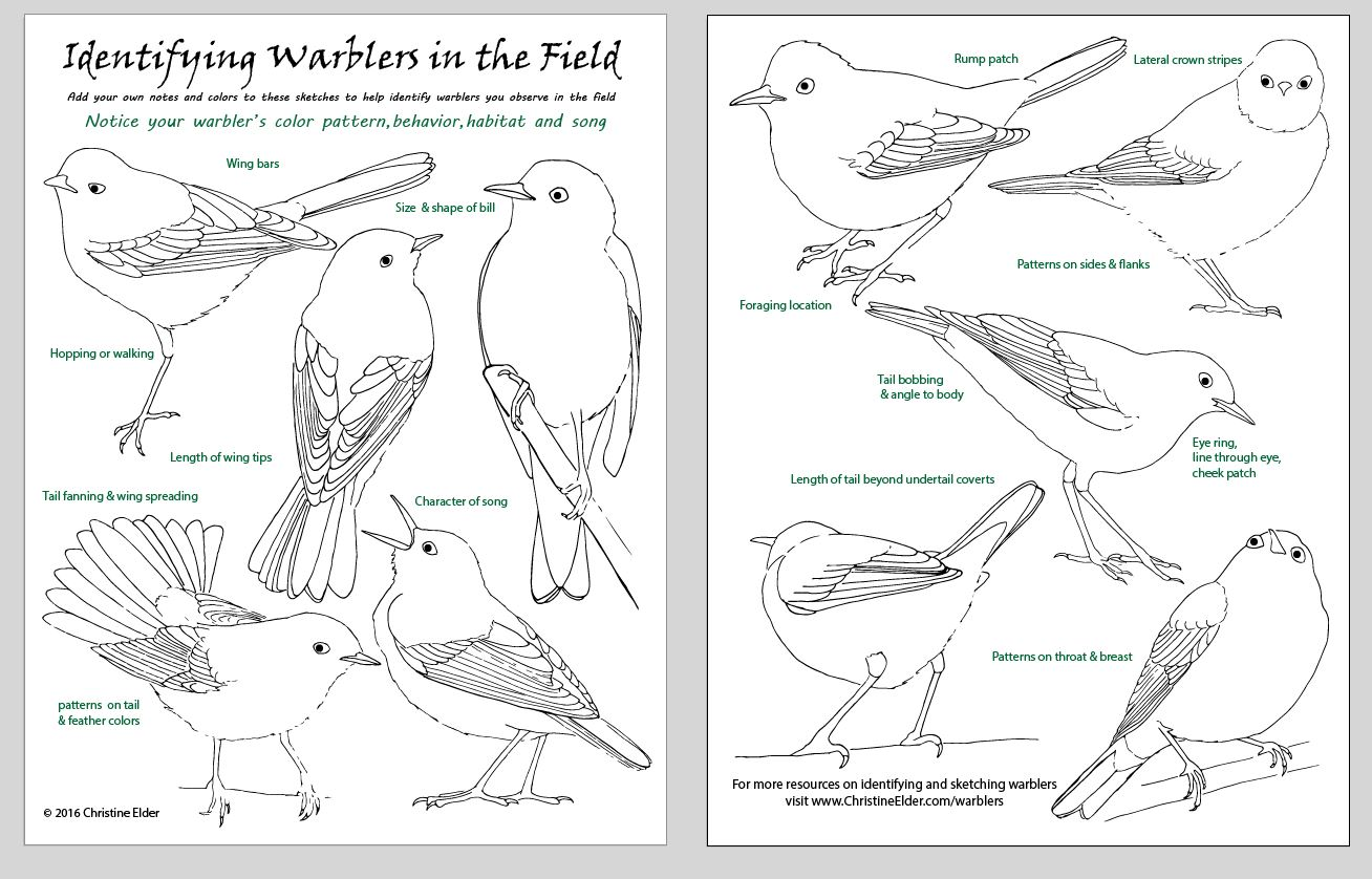Yellow Warbler coloring #9, Download drawings
