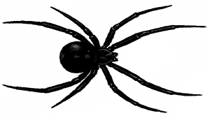 Black Widow clipart #9, Download drawings