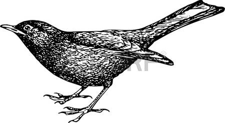 Common Blackbird clipart #11, Download drawings