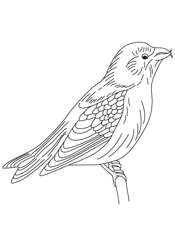 red wing coloring pages - photo#23
