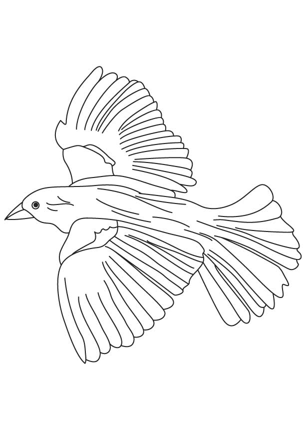 Common Blackbird coloring #2, Download drawings