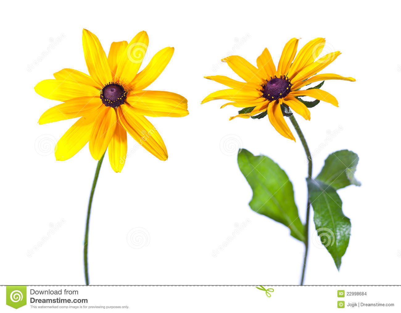 Black-eyed Susan clipart #1, Download drawings
