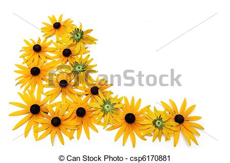 Black-eyed Susan clipart #13, Download drawings