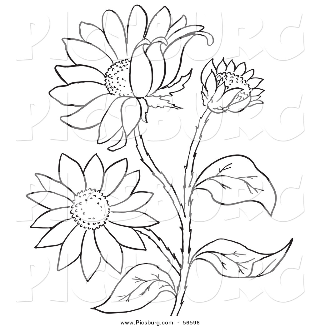 Black-eyed Susan coloring #11, Download drawings