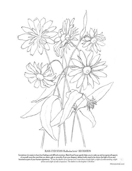 Echinacea coloring #14, Download drawings