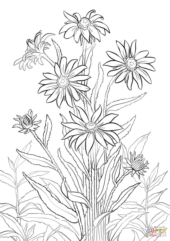 Black-eyed Susan coloring #8, Download drawings