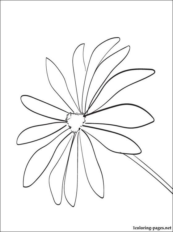 Black-eyed Susan coloring #2, Download drawings