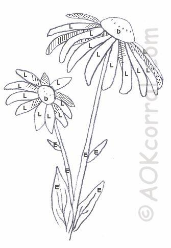 Black-eyed Susan coloring #1, Download drawings