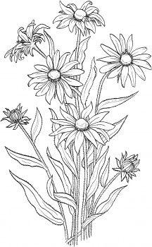 Black-eyed Susan svg #20, Download drawings