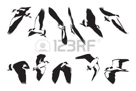 Black-masked Blackbird clipart #10, Download drawings
