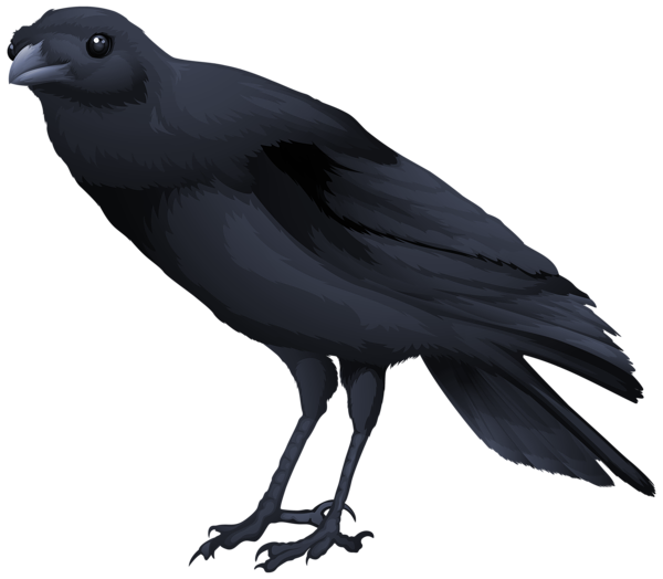 Black-masked Blackbird clipart #18, Download drawings