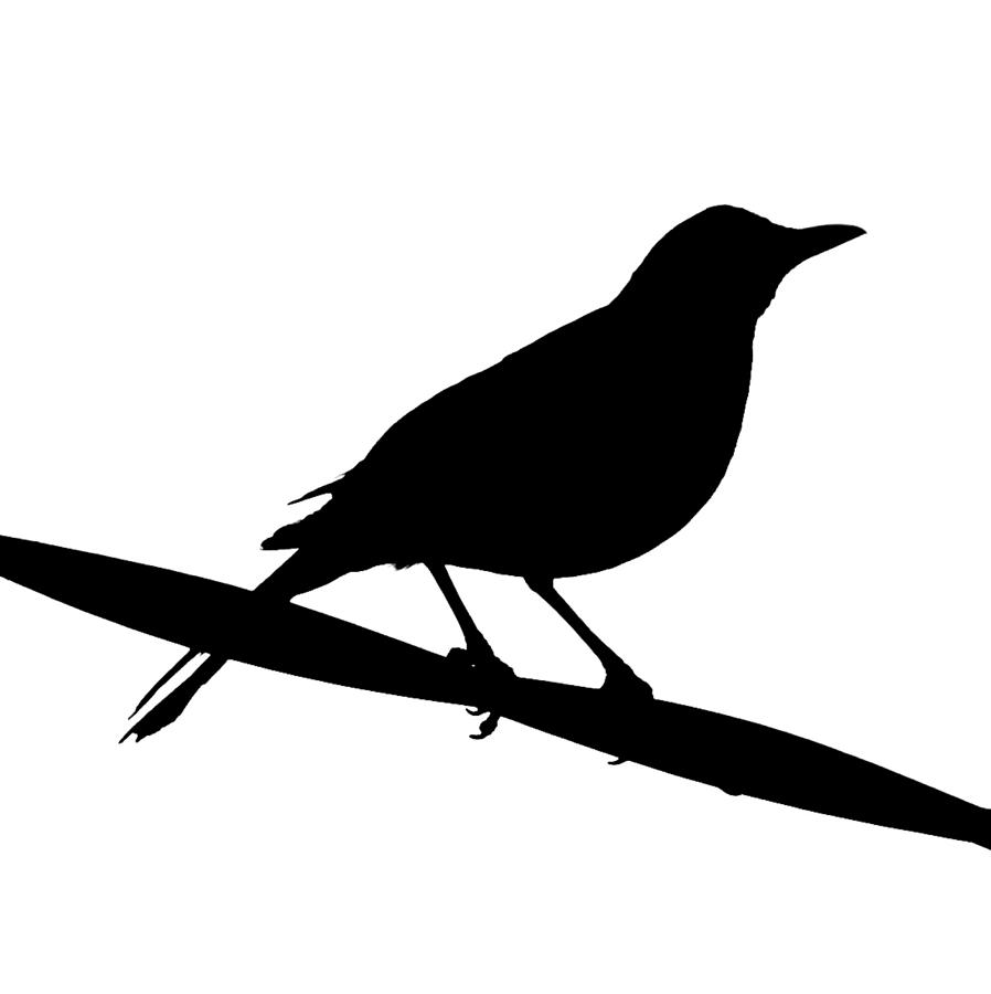 Black-masked Blackbird clipart #4, Download drawings