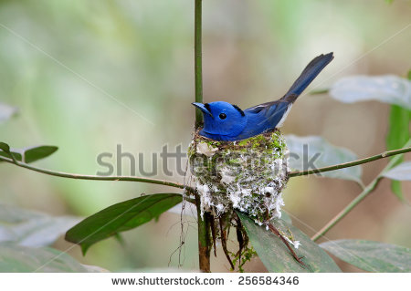 Black-naped Blue Monarch clipart #1, Download drawings