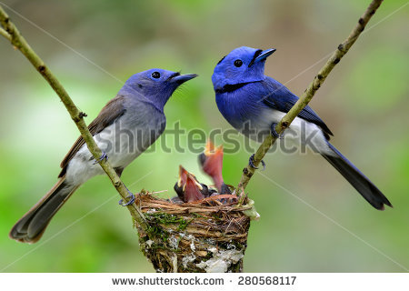 Black-naped Blue Monarch clipart #7, Download drawings