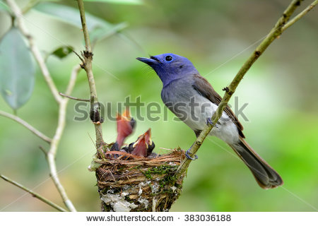 Black-naped Blue Monarch clipart #20, Download drawings